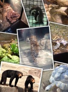 4月動物園